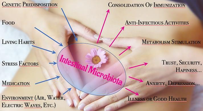 Intestinal Microbiota